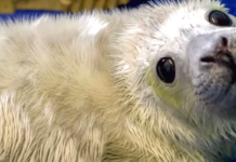 rescuers seal baby newborn cliff